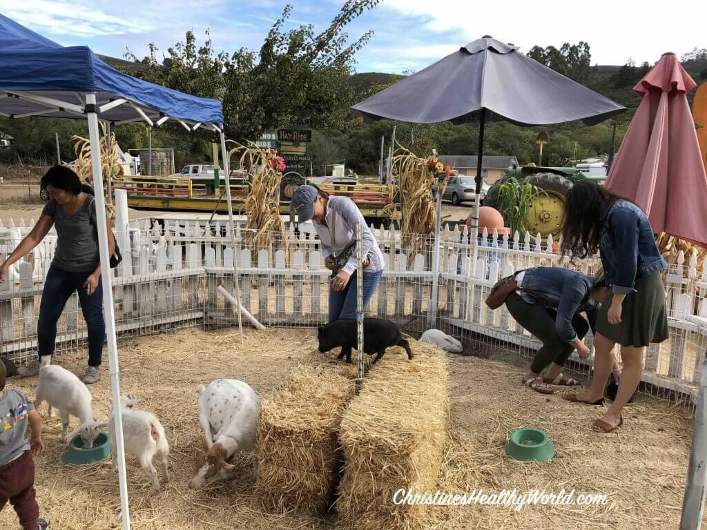 pumpkin patch bay area petting zoo