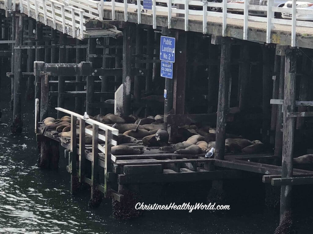 Santa Cruz Sea Lions Under Boardwalk
