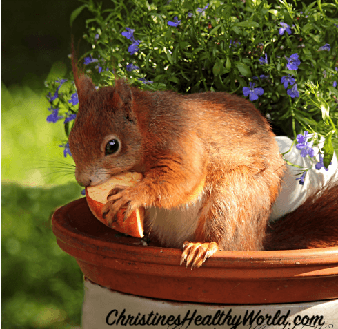 squirrels-in-the-garden